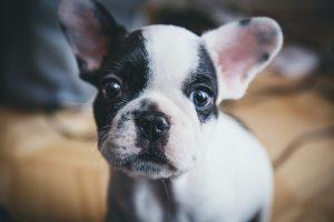 verzekeringen bij honden